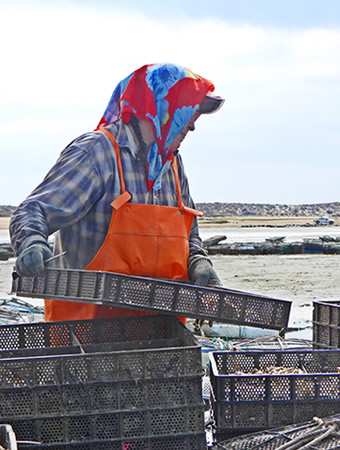 local oyster farm woman